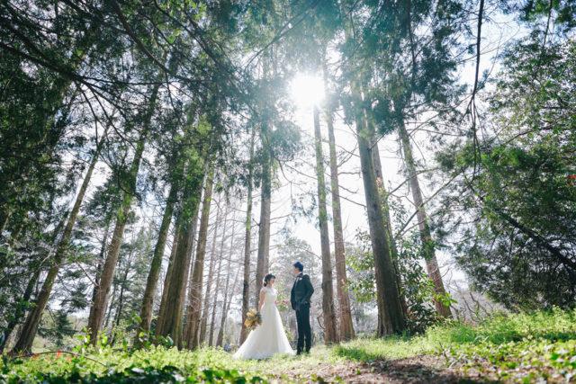 京都京都森の前撮り・フォトウェディング